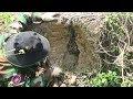 Khai Thác Tổ Ong Mật Và Quá Trình Xây Lại Tổ Cho Tổ Ong Mật • Hoa Mai Food