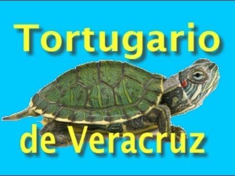 Tortugario Del Acuario De Veracruz