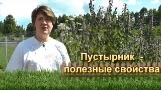 видео Плоды боярышника: полезные свойства и противопоказания, отзывы