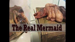 A Real Mermaid.......