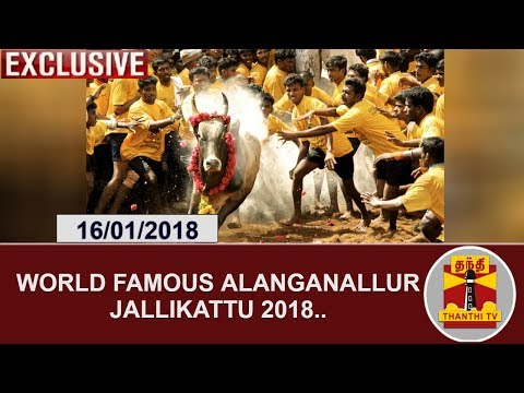 World famous Alanganallur Jallikattu 2018 | Exclusive Coverage | Thanthi TV