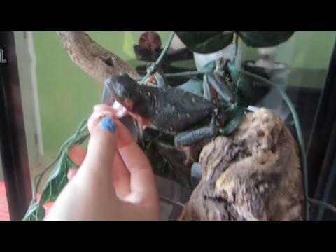 Raniux muerde a Lesslie | Los Polinesios Vlogs