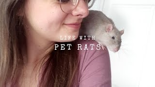 Life With Pet Rąts   Daily Routine & Q&A