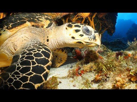 OrcaTorch D910V Underwater Light Review Cozumel Mexico,  GH5, GoPro Hero7 4k UHD