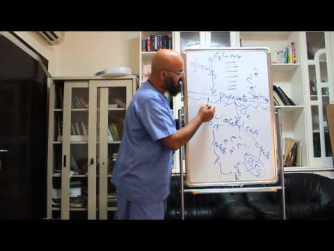 Biochemistry mini lecture series Krebs cycle مع الدكتور الهلالي
