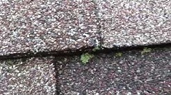 Lichen on your roof?