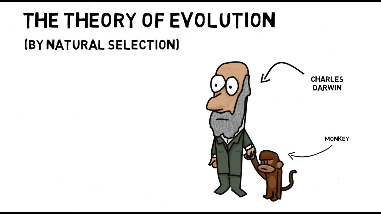 The Theory of Evolution (by Natural Selection) | Cornerstones Education -  YouTube