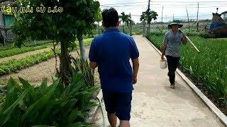 Vườn rau Ngọc Lãng, chốn xanh yên bình giữa thành phố Tuy Hòa | Phú Yên ký sự #9