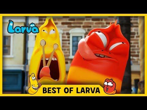 LARVA | BEST OF LARVA | Funny Cartoons for Kids | Cartoons For Children | LARVA 2017 WEEK 40