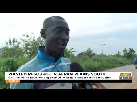 GHC1.8m cattle ranch waiting away while farmers lament cattle destruction- Adom TV (16-9-21)