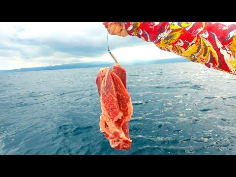 [検証]ステーキ肉を餌して船釣りしたら…?