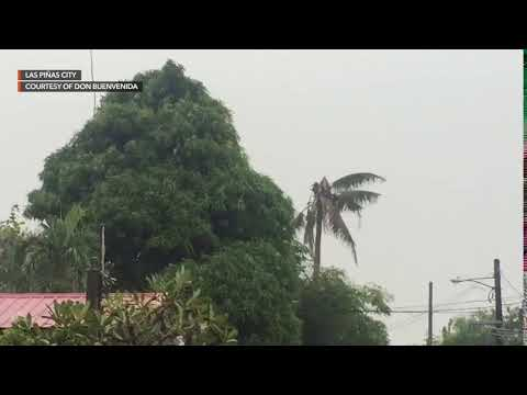 Typhoon Tisoy Continues To Bring Strong Winds In Las Piñas City