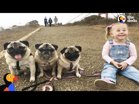 Kids And Dogs Growing Up Together as Best Friends Compilation | The Dodo