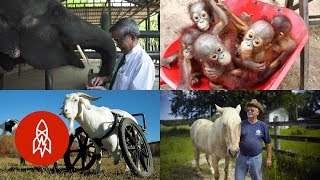 5 Amazing Stories of Animals and Their Humans