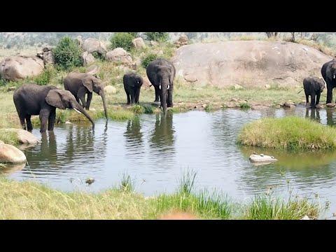 On Safari with The Four Seasons Serengeti