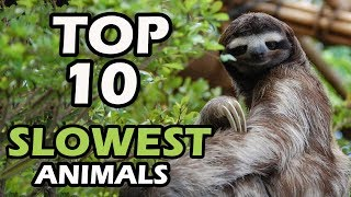 TOP 10 SLOWEST ANIMALS IN THE WORLD