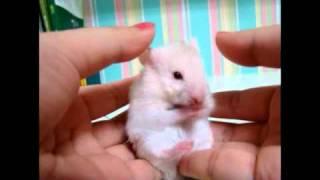 Surprised!!! A very cute hamster...