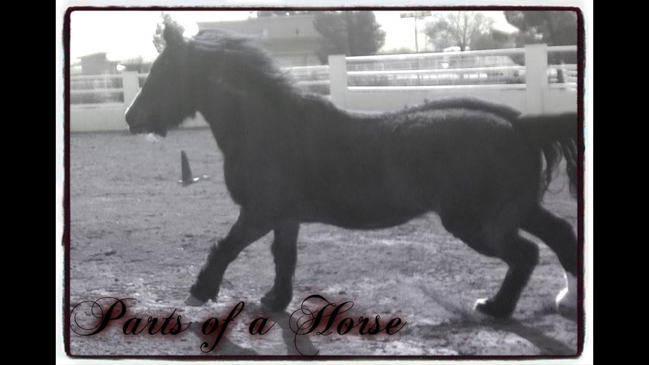 Basic Horse Anatomy - YouTube