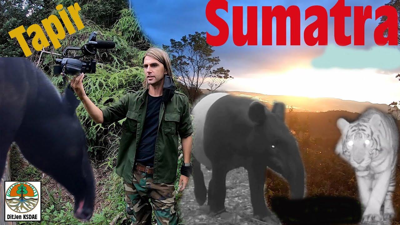 La nature BRUTE de Sumatra dans notre réserve.