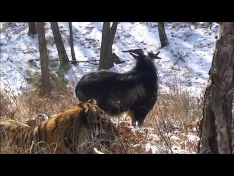 знакомства москва тигра 22 би