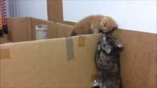 Прикольные кошки 11. Mom cat helps her kitten to escape