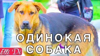 VLOG НЕСЧАСТНАЯ СОБАКА | Я ПОМОГАЮ БЕЗДОМНЫМ ЖИВОТНЫМ | Elli Di Собаки