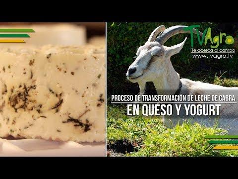 Proceso de Transformación de Leche de Cabra en Queso y Yogurt - TvAgro por Juan Gonzalo Angel
