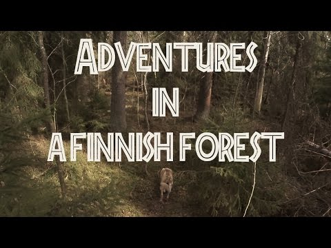 Adventures in a Finnish forest 1