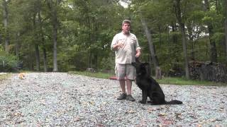 German Shepherd Dog Training - Cash | King Nc