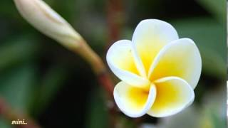 Deva Ganam Paduvanee Theera Bhoovil Vannu Njan..!!(Mini Anand)