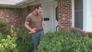 Landscaping Tips: How to Trim Bushes & Trees Near Your Home - Home Made Simple