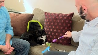 How to Keep a Cat Happy in Small Spaces | My Cat From Hell