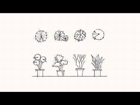 復興設計學院/室內設計全修班/植物立面圖 繪製