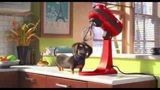 Тайная жизнь домашних животных Русский тизер трейлер http://catcut.net/yyz