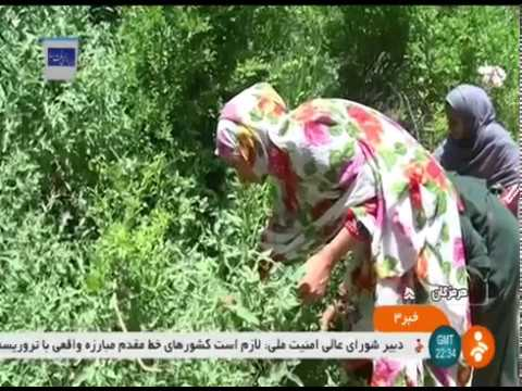 Iran Homag village, Bandar-e Abbas county روستاي هومگ شهرستان بندرعباس ايران