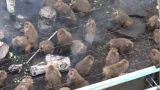 日本モンキーパーク モンキーセンター たき火にあたるサル