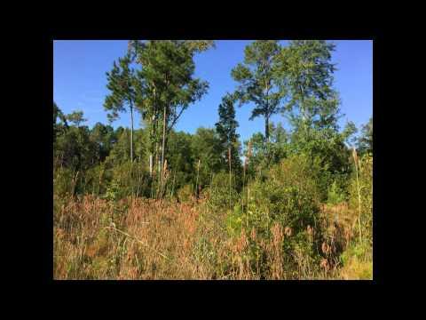 Commercial Real Estate, Land for Sale