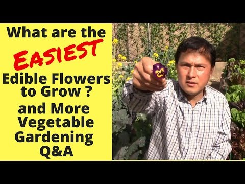 What are the Easiest Edible Flowers to Grow? & More Vegetable Gardening Q&A