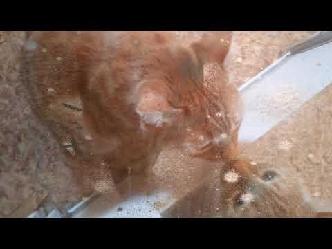 Мой  рыжий  кот  Рыжик