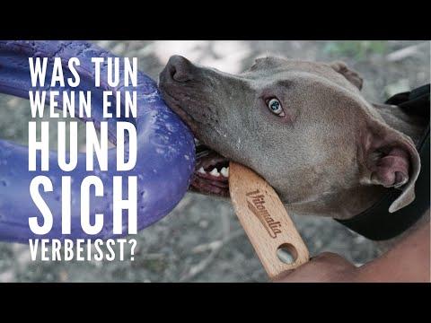 Was Tun, Wenn Hunde Sich Verbeissen? Hund Mit Breaking Stick Lösen - Hundetraining By Vitomalia