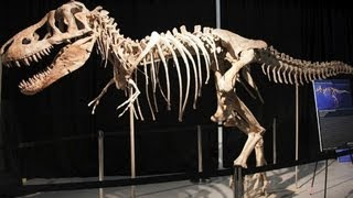 Dinosaur bones from Mongolia spark international dispute