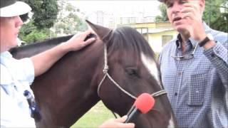 Video caballo criollo venezolano ep1 formato youtube