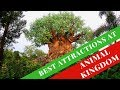 Top 5 Attractions at Animal Kingdom