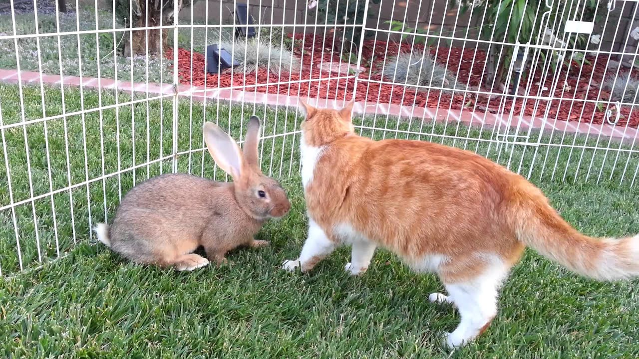 5 Flemish Giant Baby Bunnies Playing in the Grass - YouTube