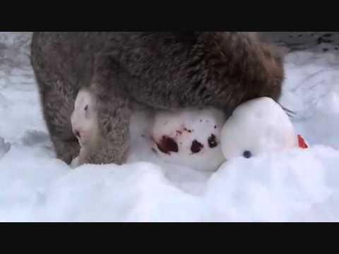 When Exotic Cats Meet Snowmen...