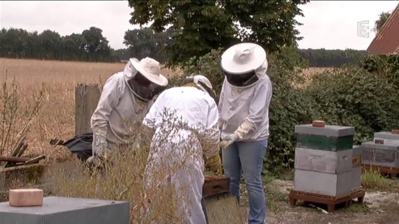 apiculteur 55