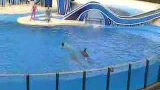 SEA WORLD DOLPHIN SHOW ORLANDO part 1