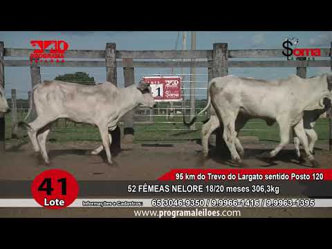 LOTE R41