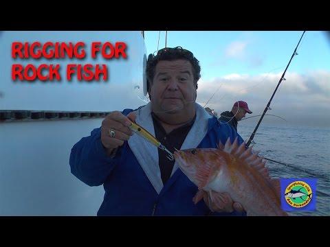 Rigging Up For Rock Fish Blog By Dan Hernandez | SPORT FISHING