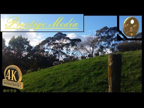 Autumn In Auckland NZ 2017 - Prestige Media 4K